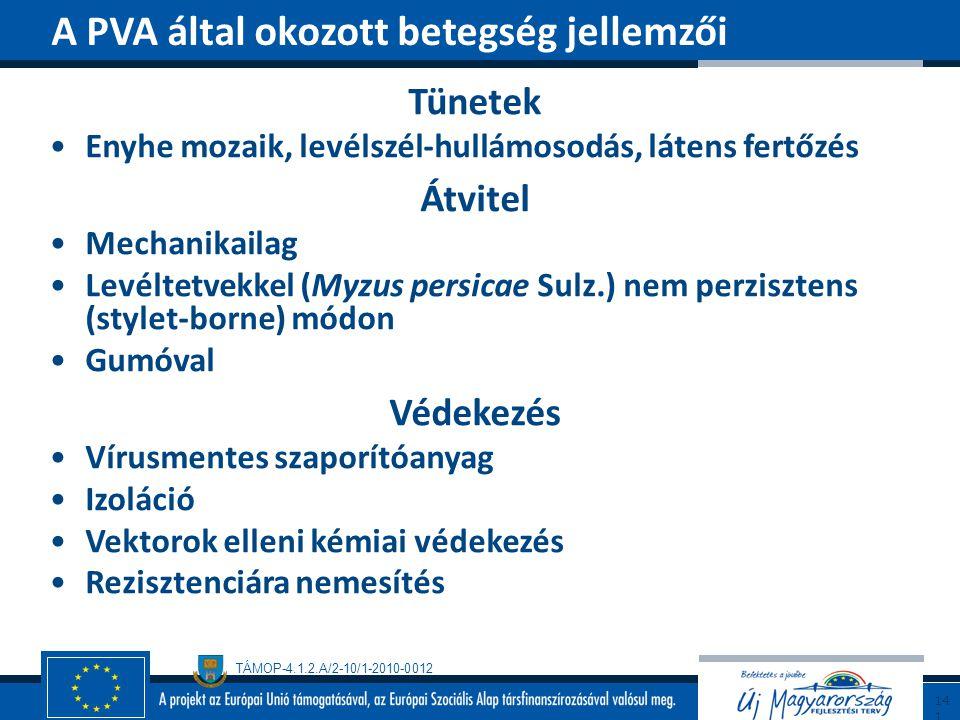 TÁMOP-4.1.2.A/2-10/1-2010-0012 Tünetek Enyhe mozaik, levélszél-hullámosodás, látens fertőzés Átvitel Mechanikailag Levéltetvekkel (Myzus persicae Sulz