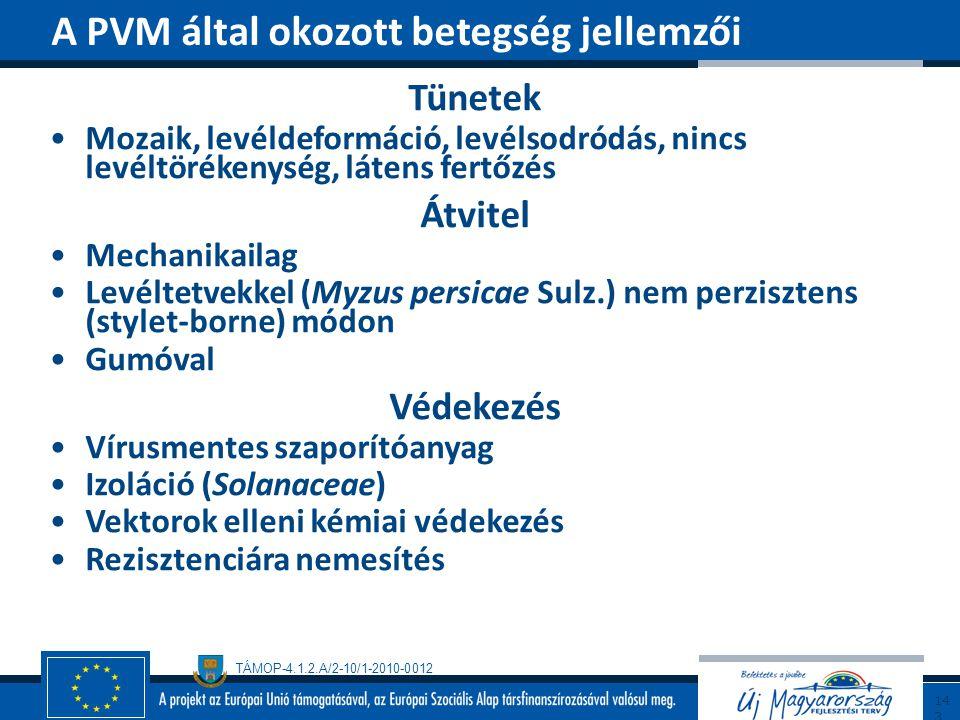 TÁMOP-4.1.2.A/2-10/1-2010-0012 Tünetek Mozaik, levéldeformáció, levélsodródás, nincs levéltörékenység, látens fertőzés Átvitel Mechanikailag Levéltetv