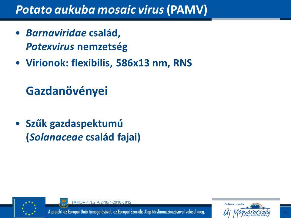 TÁMOP-4.1.2.A/2-10/1-2010-0012 Barnaviridae család, Potexvirus nemzetség Virionok: flexibilis, 586x13 nm, RNS Gazdanövényei Szűk gazdaspektumú (Solana