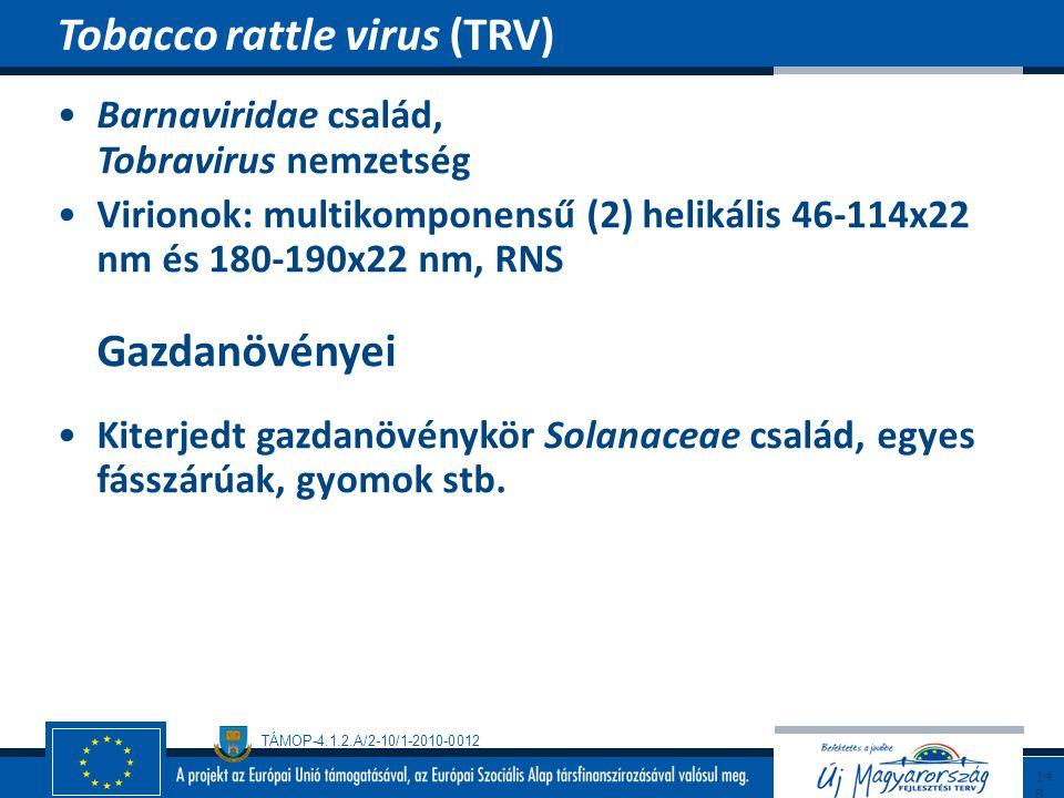TÁMOP-4.1.2.A/2-10/1-2010-0012 Barnaviridae család, Tobravirus nemzetség Virionok: multikomponensű (2) helikális 46-114x22 nm és 180-190x22 nm, RNS Ga