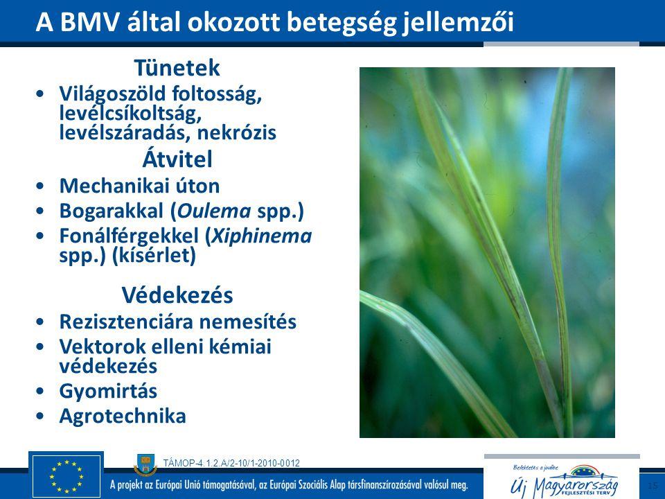 TÁMOP-4.1.2.A/2-10/1-2010-0012 Tünetek Világoszöld foltosság, levélcsíkoltság, levélszáradás, nekrózis Átvitel Mechanikai úton Bogarakkal (Oulema spp.