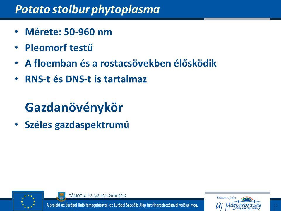 TÁMOP-4.1.2.A/2-10/1-2010-0012 Mérete: 50-960 nm Pleomorf testű A floemban és a rostacsövekben élősködik RNS-t és DNS-t is tartalmaz Gazdanövénykör Sz