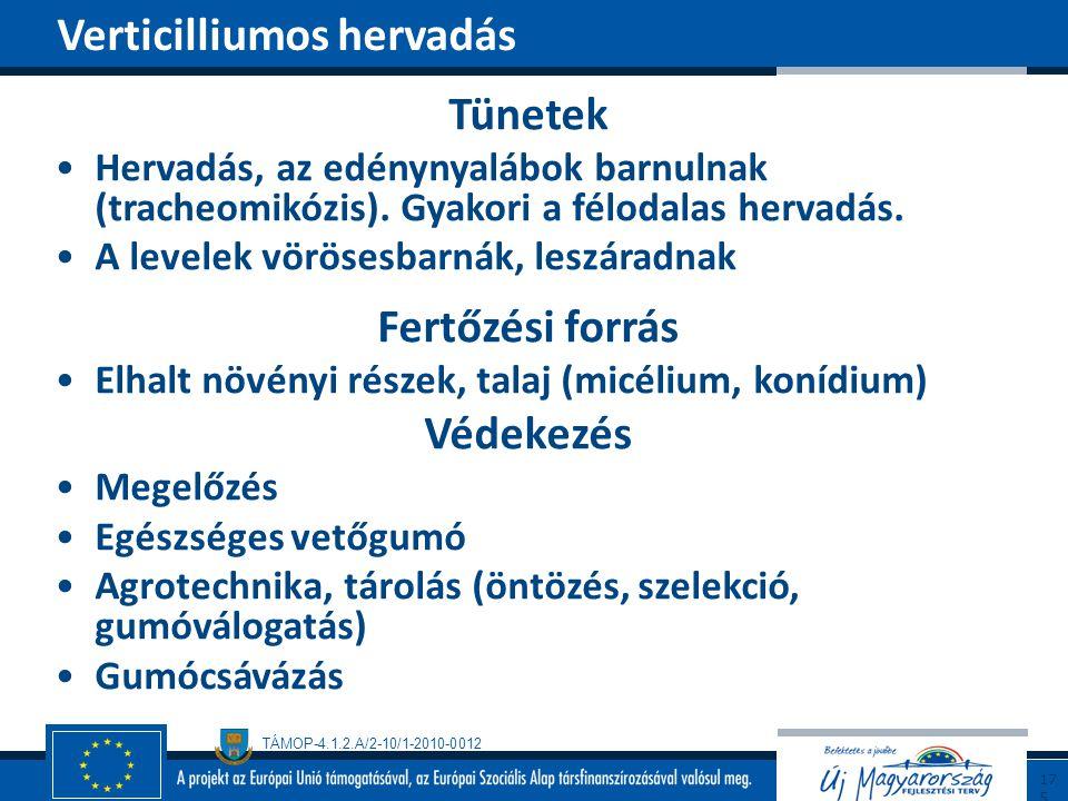 TÁMOP-4.1.2.A/2-10/1-2010-0012 Tünetek Hervadás, az edénynyalábok barnulnak (tracheomikózis). Gyakori a félodalas hervadás. A levelek vörösesbarnák, l