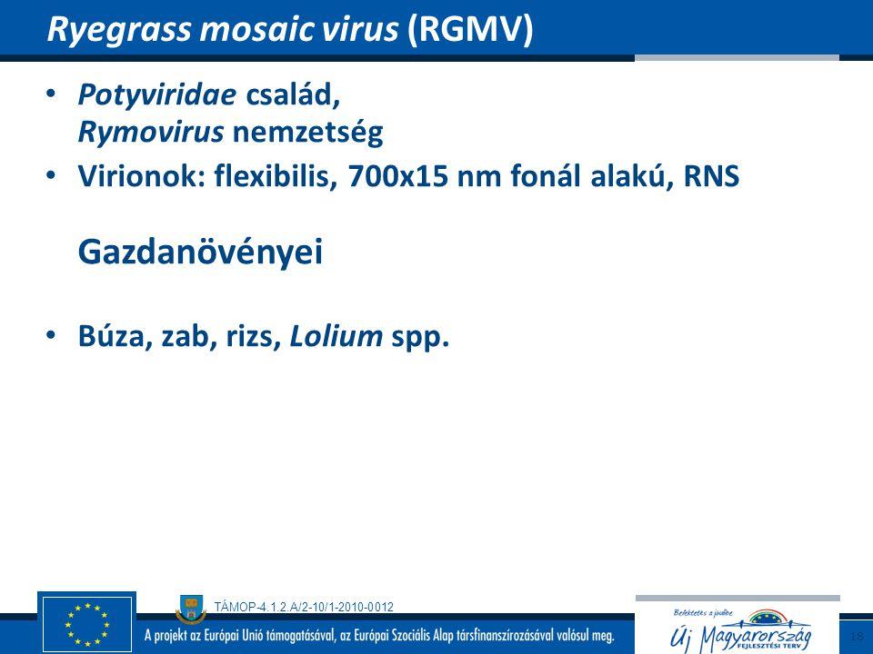 TÁMOP-4.1.2.A/2-10/1-2010-0012 Potyviridae család, Rymovirus nemzetség Virionok: flexibilis, 700x15 nm fonál alakú, RNS Gazdanövényei Búza, zab, rizs,