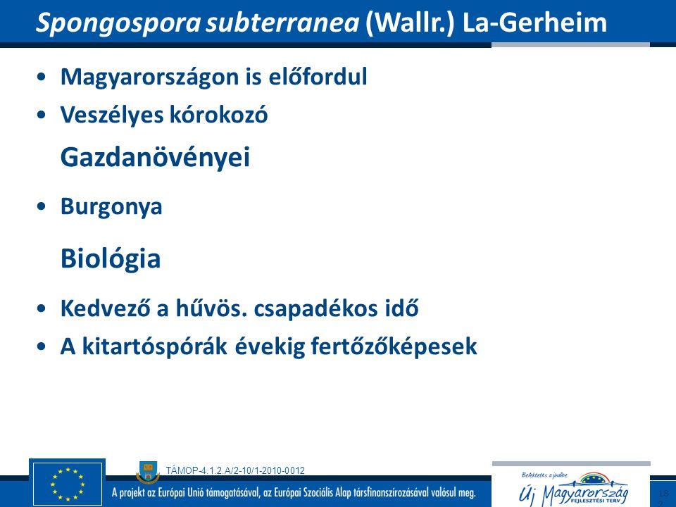 TÁMOP-4.1.2.A/2-10/1-2010-0012 Magyarországon is előfordul Veszélyes kórokozó Gazdanövényei Burgonya Biológia Kedvező a hűvös. csapadékos idő A kitart