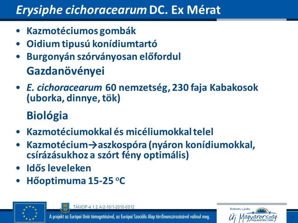 TÁMOP-4.1.2.A/2-10/1-2010-0012 Kazmotéciumos gombák Oidium tipusú konídiumtartó Burgonyán szórványosan előfordul Gazdanövényei E. cichoracearum 60 nem