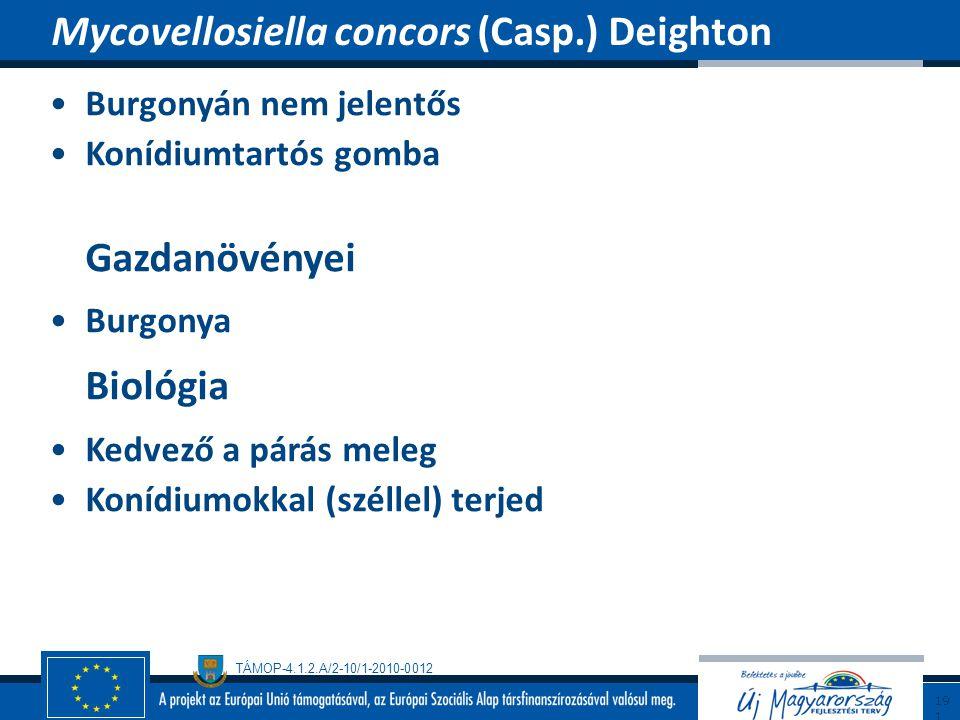 TÁMOP-4.1.2.A/2-10/1-2010-0012 Burgonyán nem jelentős Konídiumtartós gomba Gazdanövényei Burgonya Biológia Kedvező a párás meleg Konídiumokkal (szélle