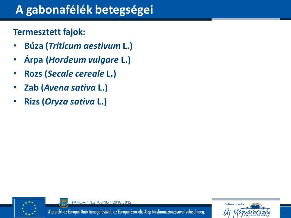 TÁMOP-4.1.2.A/2-10/1-2010-0012 Az ókortól ismert Gazdanövényei Búza, árpa, rozs, zab, fűfélék Biológia 10-15 évenként járvány (akár 50% kár) Teleutospóra→csírázás→haploid bazidiospóra→szél→köztesgazda (sóskaborbolya, mahónia) →spermogóniumok →ecidiumtelepek → ecidiospórák→gabona→ uredotelepek (terjedés)→ teleutotelepek (heteroecikus) Több mint 200 rassz ismert Hőmérsékleti optimuma 20-24 o C Kedvező a sok N Kedvező a szeles, csapadékos, meleg május Puccinia graminis Pers.: Pers.