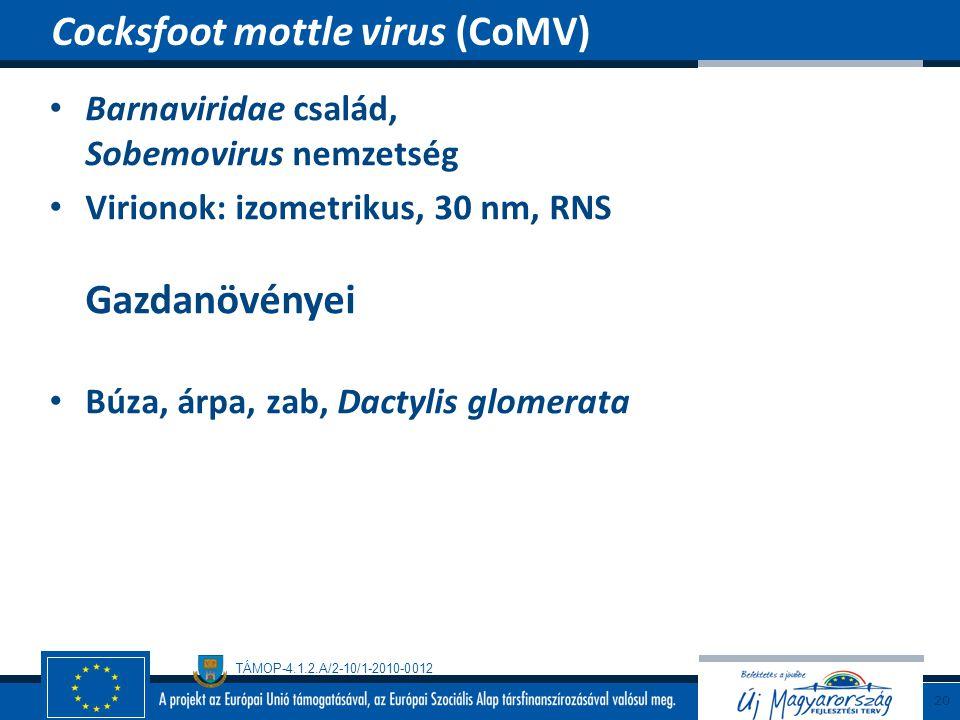 TÁMOP-4.1.2.A/2-10/1-2010-0012 Barnaviridae család, Sobemovirus nemzetség Virionok: izometrikus, 30 nm, RNS Gazdanövényei Búza, árpa, zab, Dactylis gl