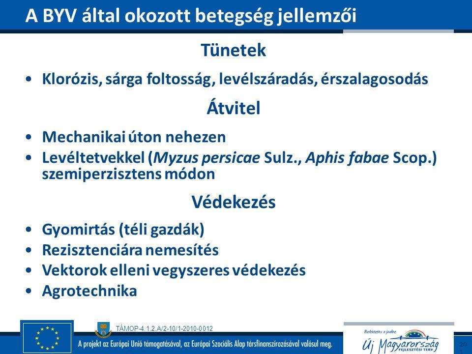 TÁMOP-4.1.2.A/2-10/1-2010-0012 Tünetek Klorózis, sárga foltosság, levélszáradás, érszalagosodás Átvitel Mechanikai úton nehezen Levéltetvekkel (Myzus