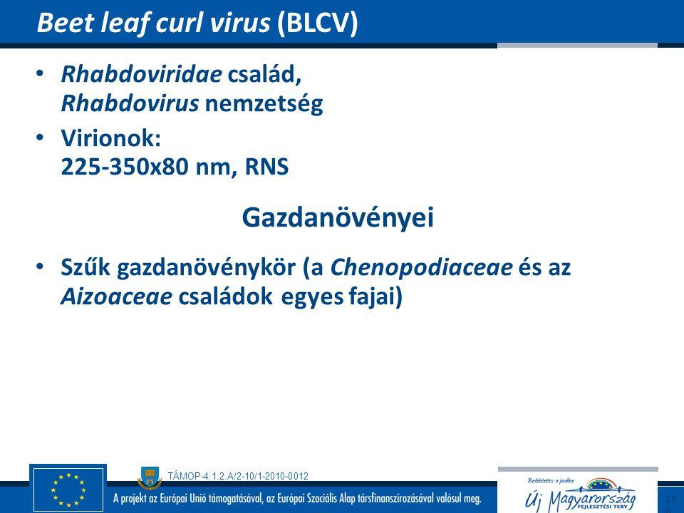 TÁMOP-4.1.2.A/2-10/1-2010-0012 Rhabdoviridae család, Rhabdovirus nemzetség Virionok: 225-350x80 nm, RNS Gazdanövényei Szűk gazdanövénykör (a Chenopodi