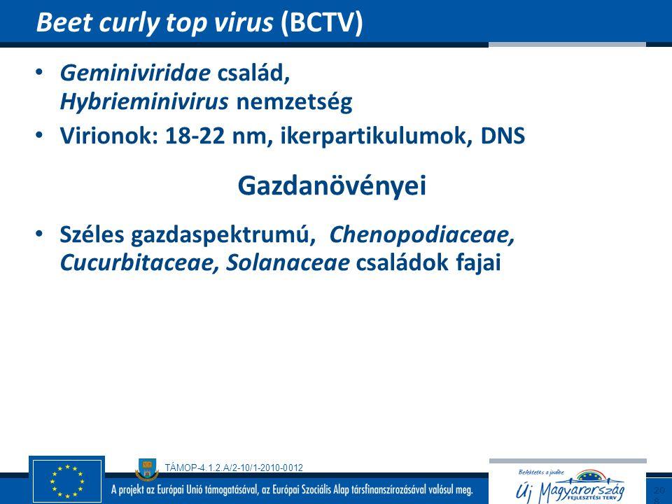 TÁMOP-4.1.2.A/2-10/1-2010-0012 Geminiviridae család, Hybrieminivirus nemzetség Virionok: 18-22 nm, ikerpartikulumok, DNS Gazdanövényei Széles gazdaspe