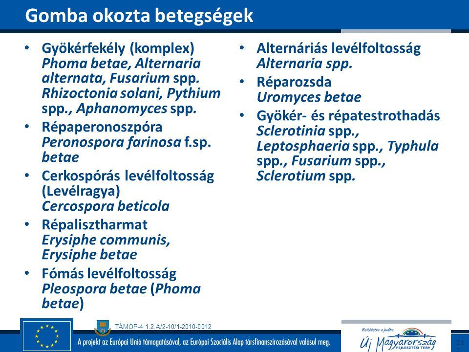 TÁMOP-4.1.2.A/2-10/1-2010-0012 Gyökérfekély (komplex) Phoma betae, Alternaria alternata, Fusarium spp. Rhizoctonia solani, Pythium spp., Aphanomyces s