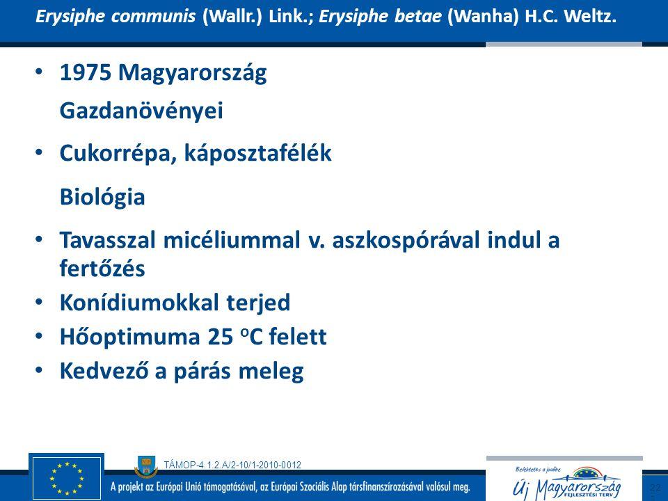 TÁMOP-4.1.2.A/2-10/1-2010-0012 1975 Magyarország Gazdanövényei Cukorrépa, káposztafélék Biológia Tavasszal micéliummal v. aszkospórával indul a fertőz