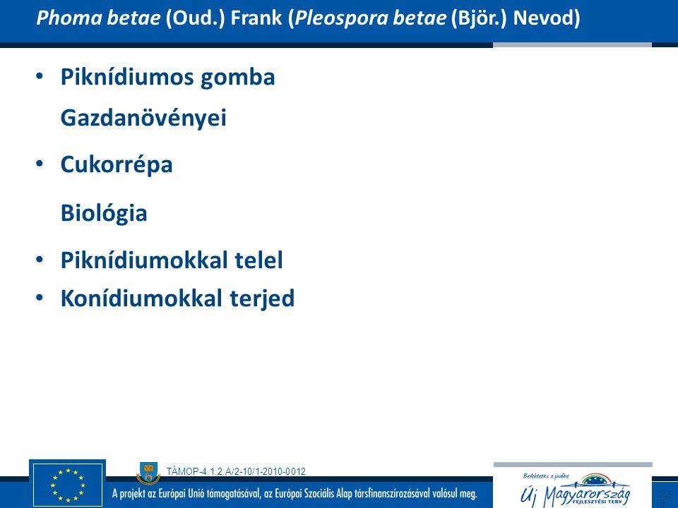 TÁMOP-4.1.2.A/2-10/1-2010-0012 Piknídiumos gomba Gazdanövényei Cukorrépa Biológia Piknídiumokkal telel Konídiumokkal terjed Phoma betae (Oud.) Frank (