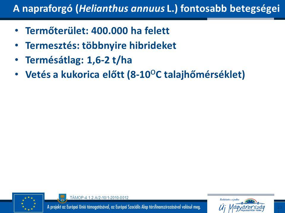 TÁMOP-4.1.2.A/2-10/1-2010-0012 Termőterület: 400.000 ha felett Termesztés: többnyire hibrideket Termésátlag: 1,6-2 t/ha Vetés a kukorica előtt (8-10 O