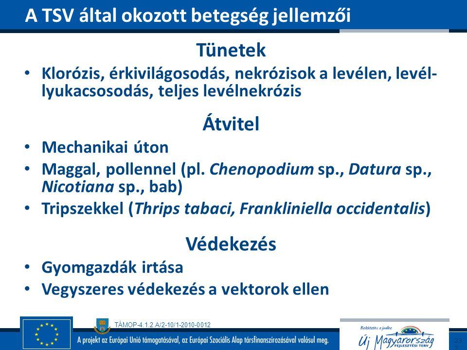 TÁMOP-4.1.2.A/2-10/1-2010-0012 Tünetek Klorózis, érkivilágosodás, nekrózisok a levélen, levél- lyukacsosodás, teljes levélnekrózis Átvitel Mechanikai