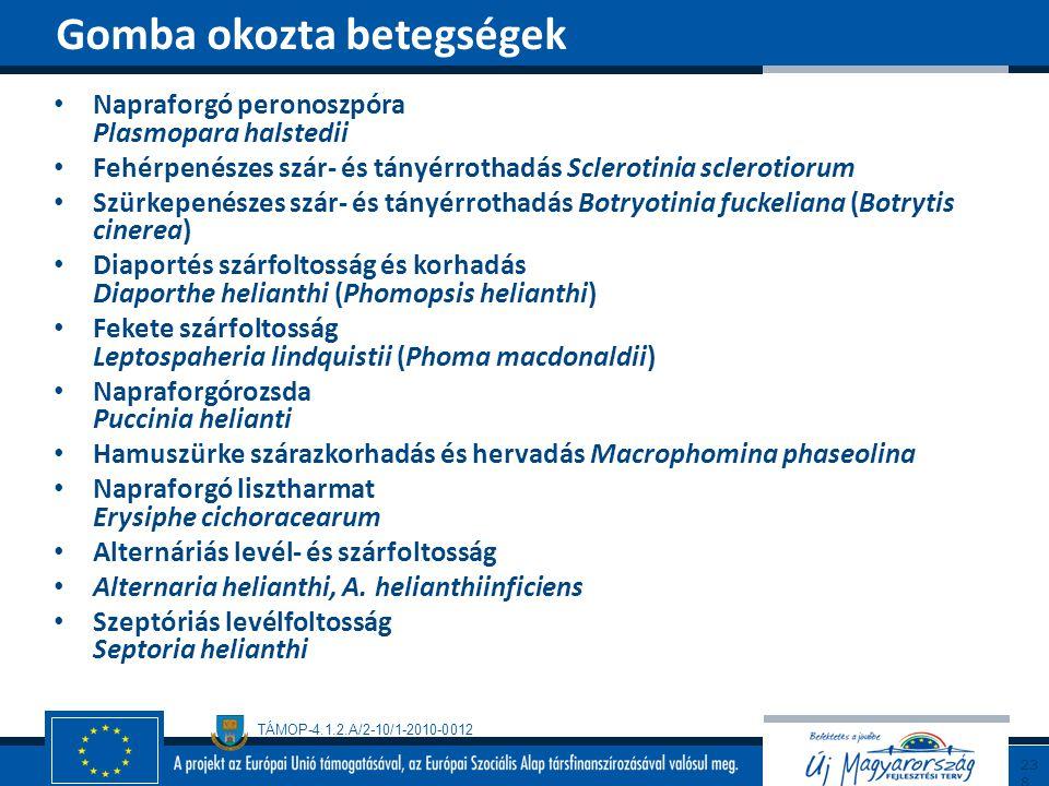 TÁMOP-4.1.2.A/2-10/1-2010-0012 Napraforgó peronoszpóra Plasmopara halstedii Fehérpenészes szár- és tányérrothadás Sclerotinia sclerotiorum Szürkepenés