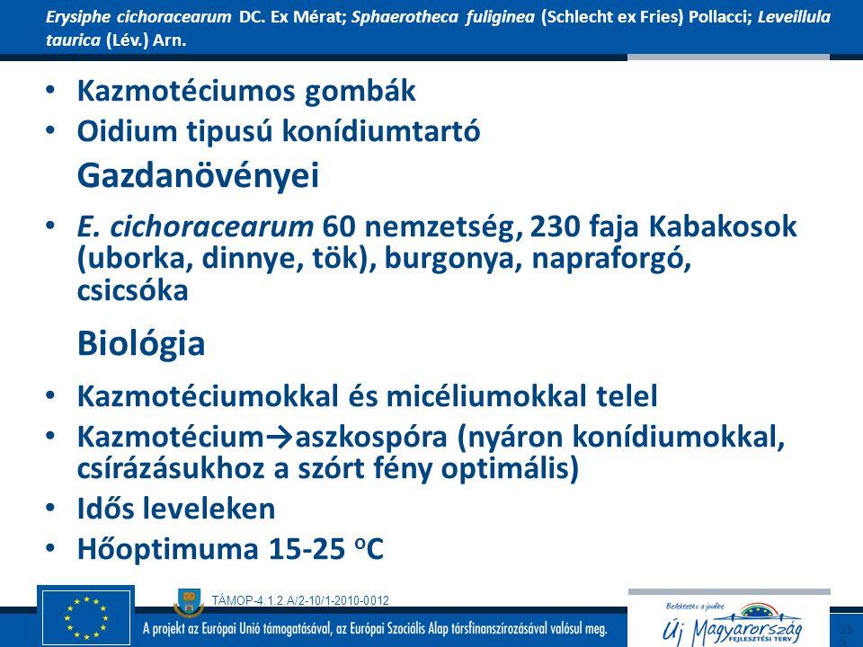 TÁMOP-4.1.2.A/2-10/1-2010-0012 Kazmotéciumos gombák Oidium tipusú konídiumtartó Gazdanövényei E. cichoracearum 60 nemzetség, 230 faja Kabakosok (ubork