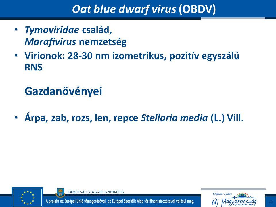 TÁMOP-4.1.2.A/2-10/1-2010-0012 Tymoviridae család, Marafivirus nemzetség Virionok: 28-30 nm izometrikus, pozitív egyszálú RNS Gazdanövényei Árpa, zab,