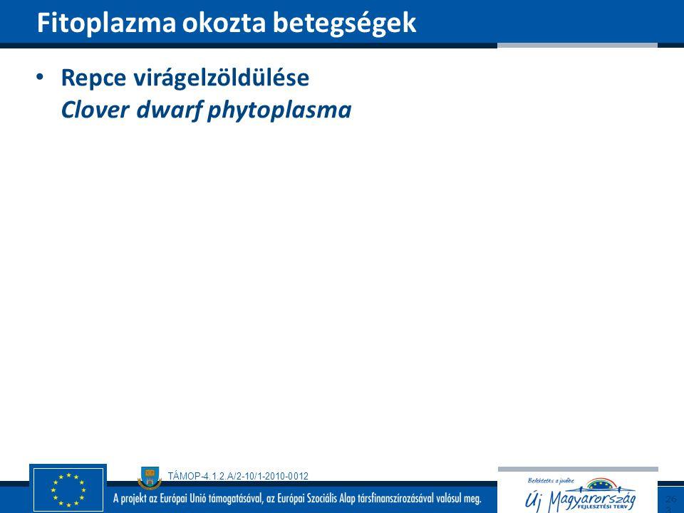 TÁMOP-4.1.2.A/2-10/1-2010-0012 Repce virágelzöldülése Clover dwarf phytoplasma Fitoplazma okozta betegségek263