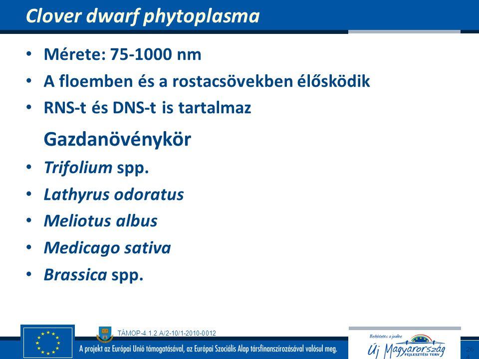 TÁMOP-4.1.2.A/2-10/1-2010-0012 Mérete: 75-1000 nm A floemben és a rostacsövekben élősködik RNS-t és DNS-t is tartalmaz Gazdanövénykör Trifolium spp. L