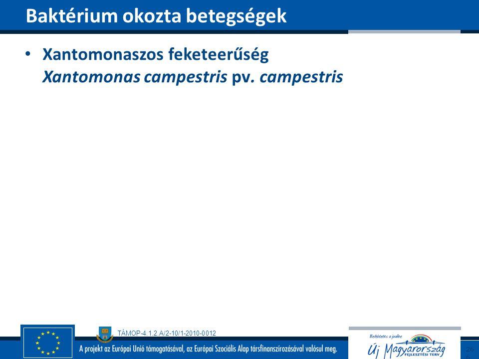 TÁMOP-4.1.2.A/2-10/1-2010-0012 Xantomonaszos feketeerűség Xantomonas campestris pv. campestris Baktérium okozta betegségek266