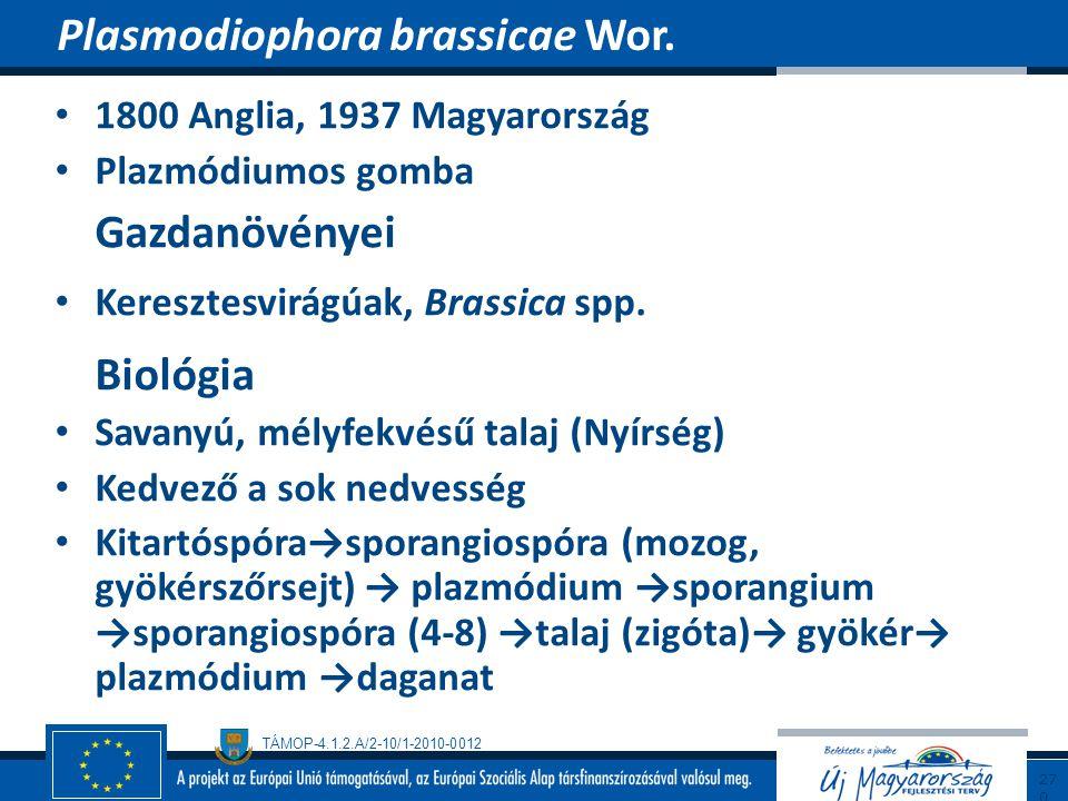 TÁMOP-4.1.2.A/2-10/1-2010-0012 1800 Anglia, 1937 Magyarország Plazmódiumos gomba Gazdanövényei Keresztesvirágúak, Brassica spp. Biológia Savanyú, mély