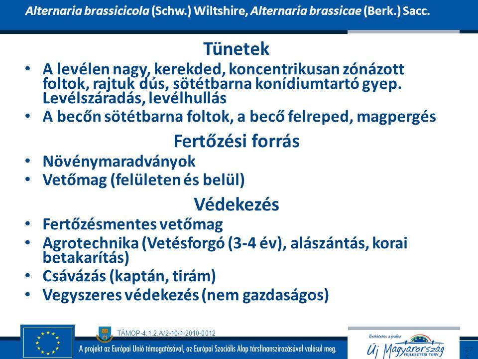 TÁMOP-4.1.2.A/2-10/1-2010-0012 Tünetek A levélen nagy, kerekded, koncentrikusan zónázott foltok, rajtuk dús, sötétbarna konídiumtartó gyep. Levélszára