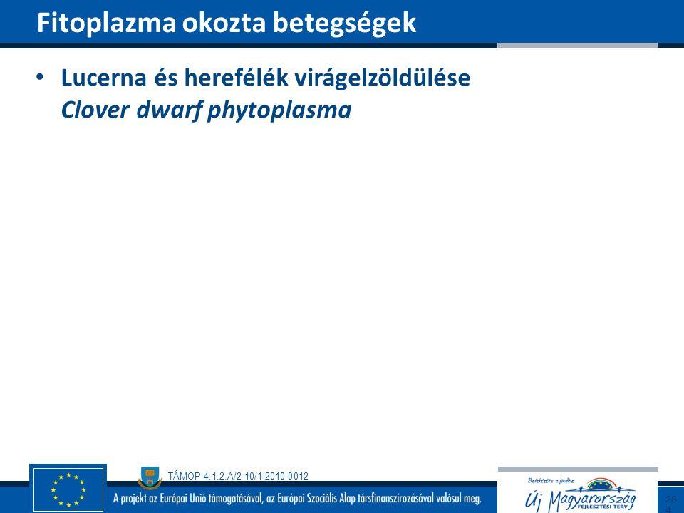 TÁMOP-4.1.2.A/2-10/1-2010-0012 Lucerna és herefélék virágelzöldülése Clover dwarf phytoplasma Fitoplazma okozta betegségek284