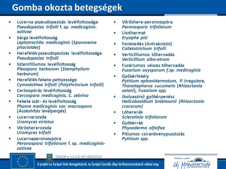 TÁMOP-4.1.2.A/2-10/1-2010-0012 Lucerna pszeudopezizás levélfoltossága Pseudopeziza trifolii f. sp. medicaginis- sativae Sárga levélfoltosság Leptotroc