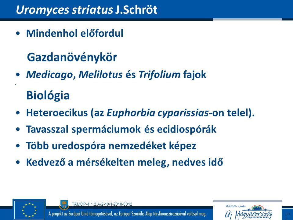 TÁMOP-4.1.2.A/2-10/1-2010-0012 Mindenhol előfordul Gazdanövénykör Medicago, Melilotus és Trifolium fajok Biológia Heteroecikus (az Euphorbia cyparissi