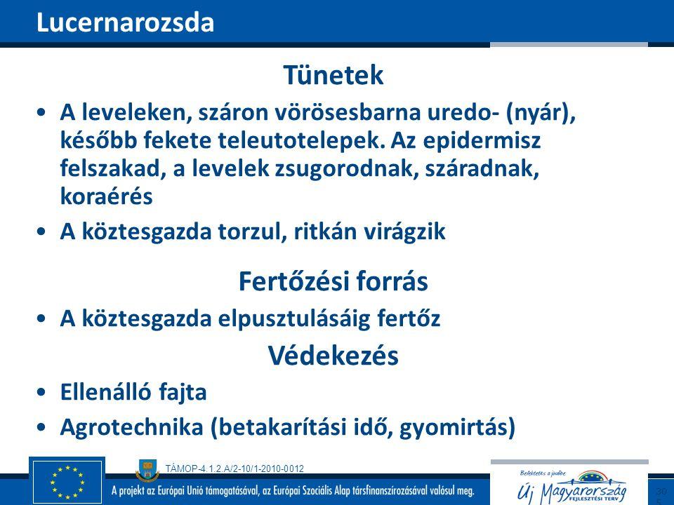 TÁMOP-4.1.2.A/2-10/1-2010-0012 Tünetek A leveleken, száron vörösesbarna uredo- (nyár), később fekete teleutotelepek. Az epidermisz felszakad, a levele