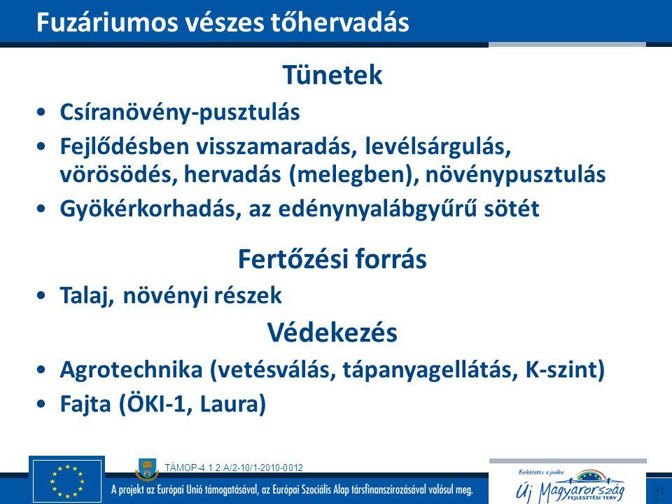 TÁMOP-4.1.2.A/2-10/1-2010-0012 Tünetek Csíranövény-pusztulás Fejlődésben visszamaradás, levélsárgulás, vörösödés, hervadás (melegben), növénypusztulás