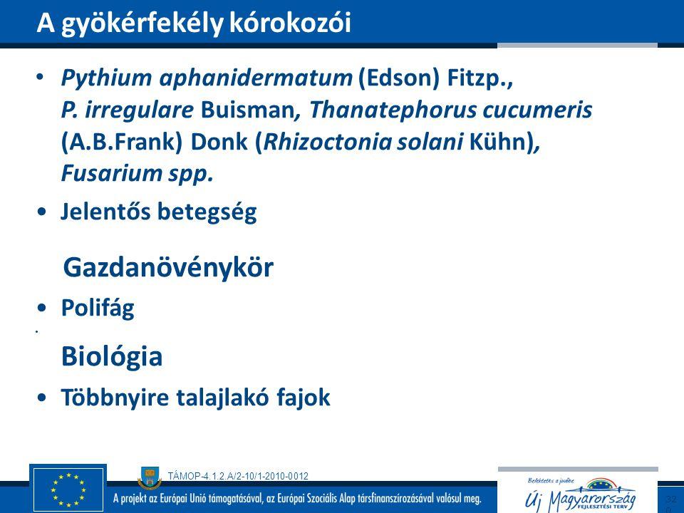 TÁMOP-4.1.2.A/2-10/1-2010-0012 Pythium aphanidermatum (Edson) Fitzp., P. irregulare Buisman, Thanatephorus cucumeris (A.B.Frank) Donk (Rhizoctonia sol