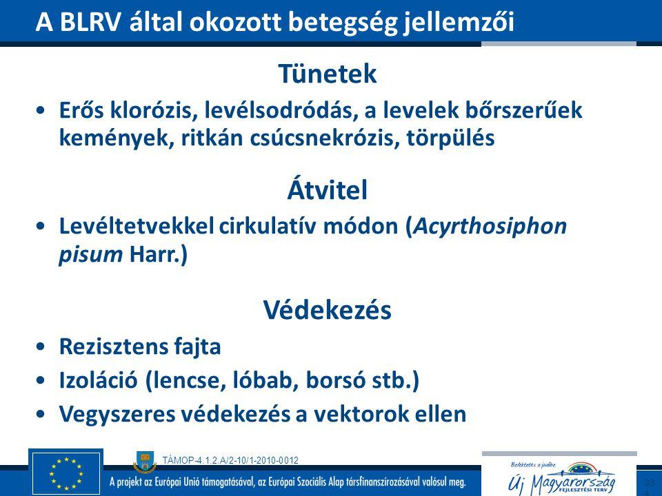 TÁMOP-4.1.2.A/2-10/1-2010-0012 Tünetek Erős klorózis, levélsodródás, a levelek bőrszerűek kemények, ritkán csúcsnekrózis, törpülés Átvitel Levéltetvek