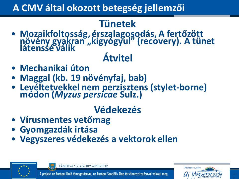 """TÁMOP-4.1.2.A/2-10/1-2010-0012 Tünetek Mozaikfoltosság, érszalagosodás, A fertőzött növény gyakran """"kigyógyul"""" (recovery). A tünet látenssé válik Átvi"""