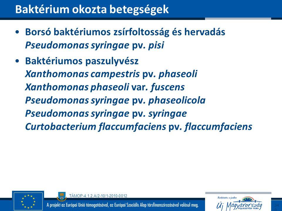TÁMOP-4.1.2.A/2-10/1-2010-0012 Borsó baktériumos zsírfoltosság és hervadás Pseudomonas syringae pv. pisi Baktériumos paszulyvész Xanthomonas campestri