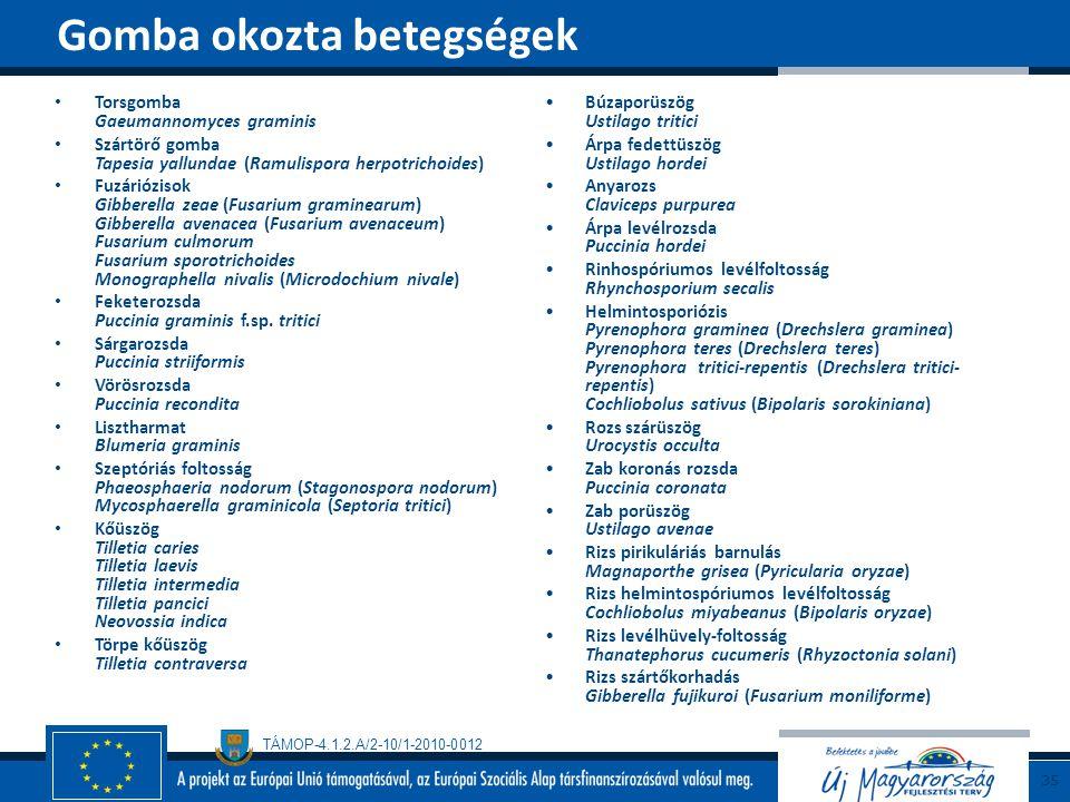 TÁMOP-4.1.2.A/2-10/1-2010-0012 Torsgomba Gaeumannomyces graminis Szártörő gomba Tapesia yallundae (Ramulispora herpotrichoides) Fuzáriózisok Gibberell