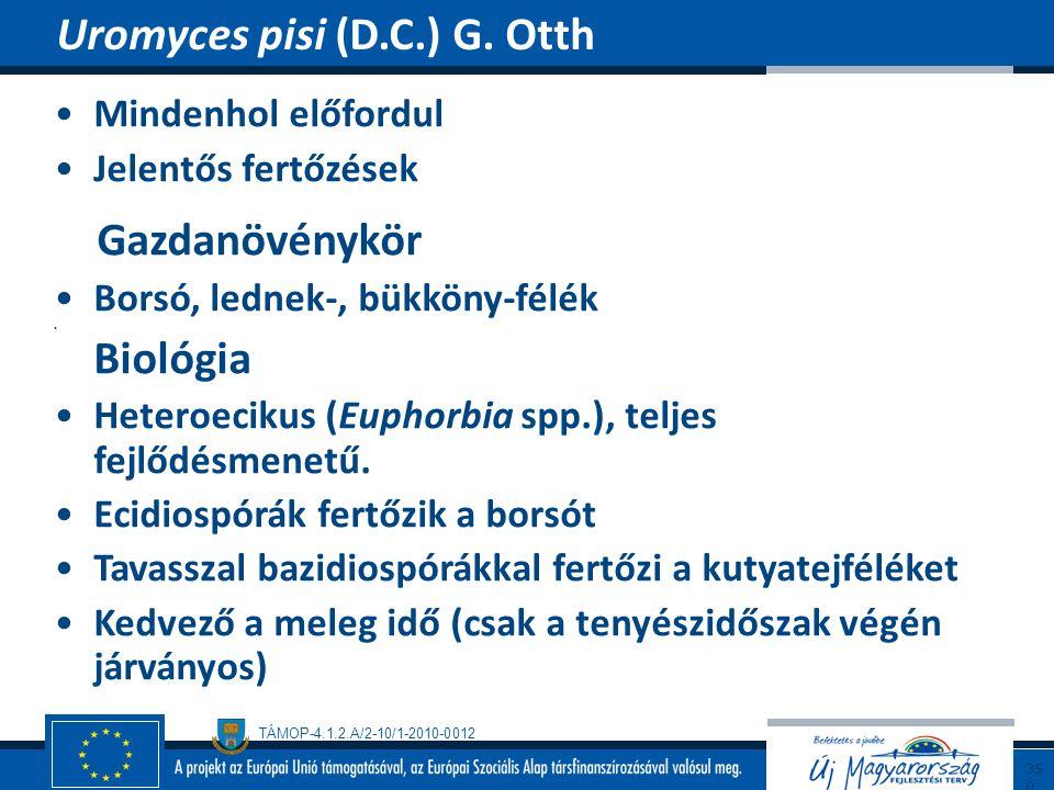 TÁMOP-4.1.2.A/2-10/1-2010-0012 Mindenhol előfordul Jelentős fertőzések Gazdanövénykör Borsó, lednek-, bükköny-félék Biológia Heteroecikus (Euphorbia s