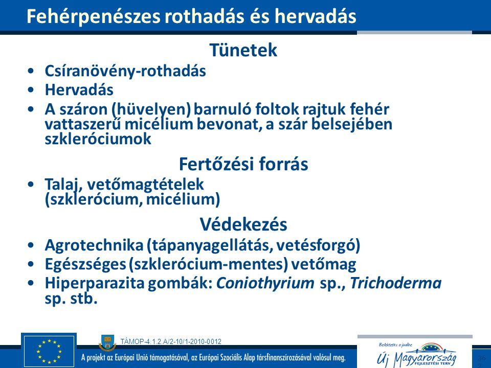 TÁMOP-4.1.2.A/2-10/1-2010-0012 Tünetek Csíranövény-rothadás Hervadás A száron (hüvelyen) barnuló foltok rajtuk fehér vattaszerű micélium bevonat, a sz