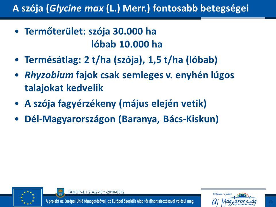 TÁMOP-4.1.2.A/2-10/1-2010-0012 Termőterület: szója 30.000 ha lóbab 10.000 ha Termésátlag: 2 t/ha (szója), 1,5 t/ha (lóbab) Rhyzobium fajok csak semleg