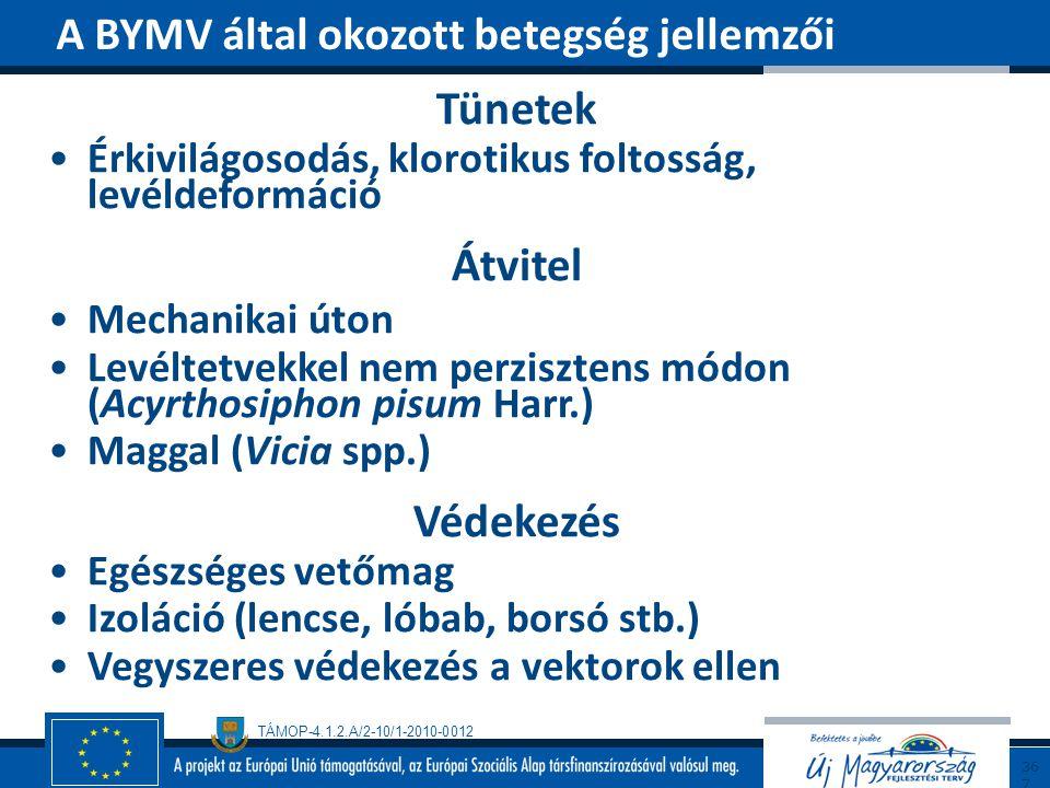 TÁMOP-4.1.2.A/2-10/1-2010-0012 Tünetek Érkivilágosodás, klorotikus foltosság, levéldeformáció Átvitel Mechanikai úton Levéltetvekkel nem perzisztens m