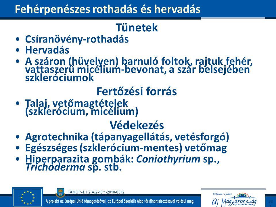 TÁMOP-4.1.2.A/2-10/1-2010-0012 Tünetek Csíranövény-rothadás Hervadás A száron (hüvelyen) barnuló foltok, rajtuk fehér, vattaszerű micélium-bevonat, a