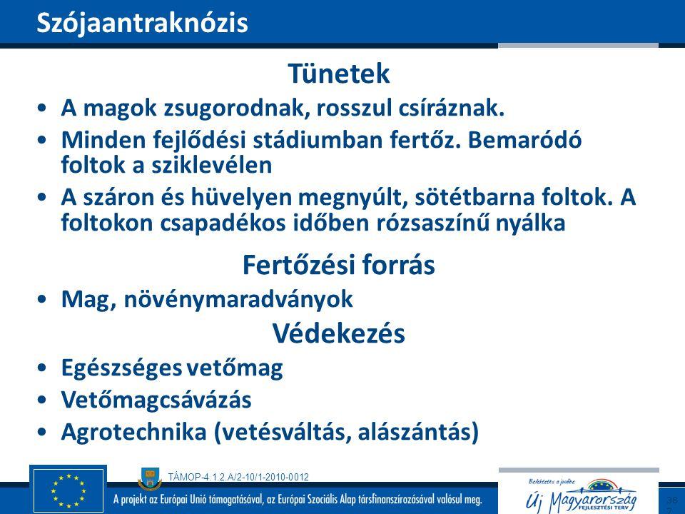 TÁMOP-4.1.2.A/2-10/1-2010-0012 Tünetek A magok zsugorodnak, rosszul csíráznak. Minden fejlődési stádiumban fertőz. Bemaródó foltok a sziklevélen A szá
