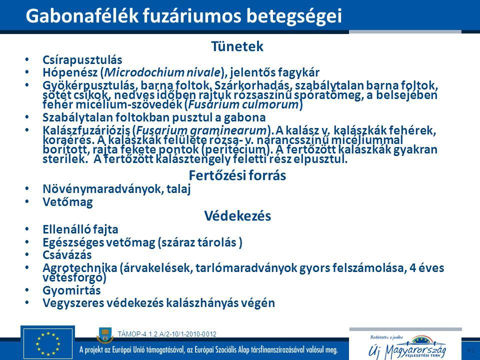 TÁMOP-4.1.2.A/2-10/1-2010-0012 Tünetek Csírapusztulás Hópenész (Microdochium nivale), jelentős fagykár Gyökérpusztulás, barna foltok. Szárkorhadás, sz