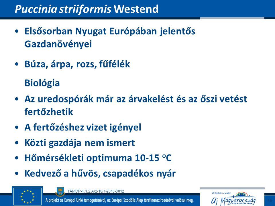 TÁMOP-4.1.2.A/2-10/1-2010-0012 Elsősorban Nyugat Európában jelentős Gazdanövényei Búza, árpa, rozs, fűfélék Biológia Az uredospórák már az árvakelést