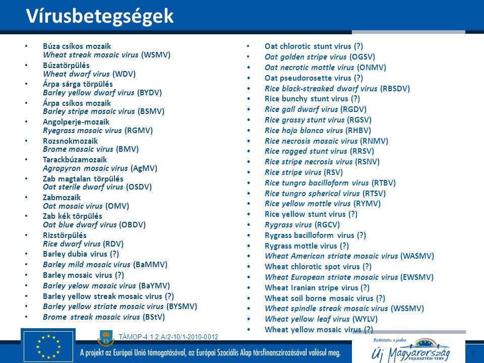 TÁMOP-4.1.2.A/2-10/1-2010-0012 Elterjedt betegsége Gazdanövénykör Széles gazdaspektrumú (pl.