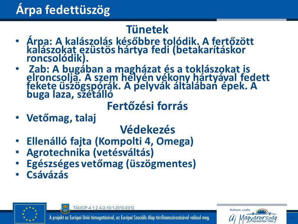 TÁMOP-4.1.2.A/2-10/1-2010-0012 Tünetek Árpa: A kalászolás későbbre tolódik. A fertőzött kalászokat ezüstös hártya fedi (betakarításkor roncsolódik). Z