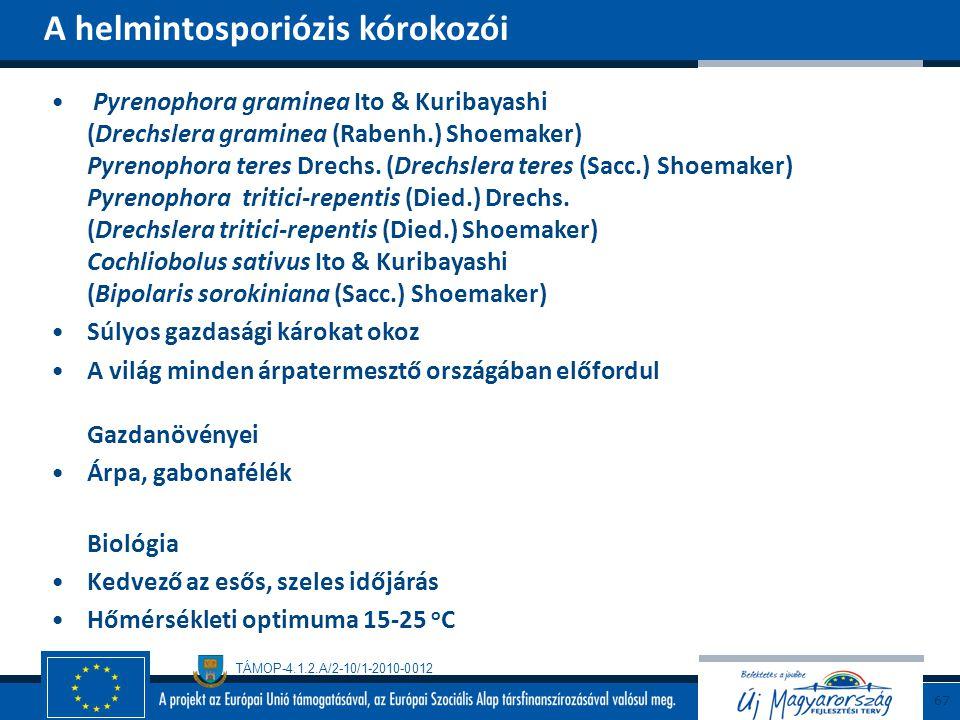TÁMOP-4.1.2.A/2-10/1-2010-0012 Pyrenophora graminea Ito & Kuribayashi (Drechslera graminea (Rabenh.) Shoemaker) Pyrenophora teres Drechs. (Drechslera
